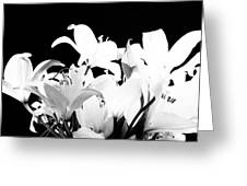 Lilies In Black And White Greeting Card