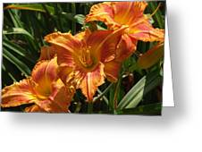 Lily Trio Greeting Card