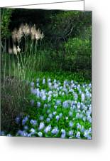 Lilies In Bloom Greeting Card