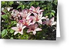 Lilies In Pink Greeting Card
