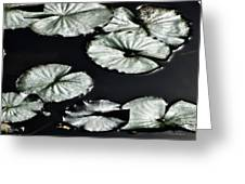 Lilies Of The Deep Greeting Card