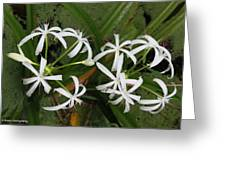 Lilies Of The Swamp Greeting Card