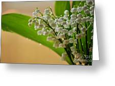 Lilies Of The Valley 1 Greeting Card