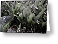 Lilies Of The Valley Mindscape No 2 Greeting Card