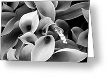 Lilies Of The Vallley Greeting Card