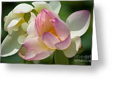 Lilies Of The Water Ib Greeting Card