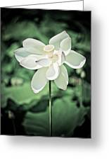 Lilies Of The Water Ivb Greeting Card