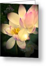 Lilies Of The Water Vib Greeting Card