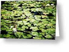 Lilies Of The Water Viii Greeting Card