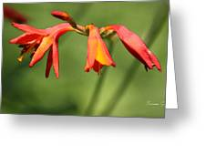 Lilies On Fire Greeting Card