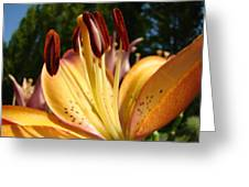 Lilies Orange Glowing Lily Flowers Giclee Prints Baslee Troutman Greeting Card