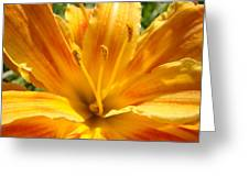 Lilies Orange Yellow Lily Flower 1 Giclee Art Prints Baslee Troutman Greeting Card