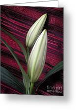 Lilies Paired On Red Brocade Greeting Card