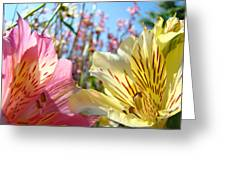Lilies Pink Yellow Lily Flowers Canvas Art Prints Baslee Troutman Greeting Card