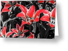 Lilies With A Splash Of Color Greeting Card