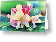 Lillies Greeting Card by John Winner