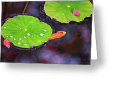 Lillies On Water Greeting Card