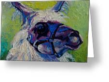 Lilloet - Llama Greeting Card
