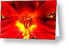 Lilly A Flame Greeting Card