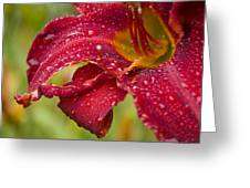Lilly After Rain Greeting Card
