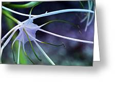 Lilly Flower Purple Greeting Card