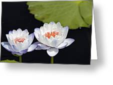 Lilly Flowers Greeting Card