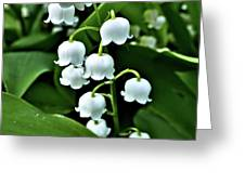 Lilly Of The Valley Flowers Greeting Card by Jeremy Hayden
