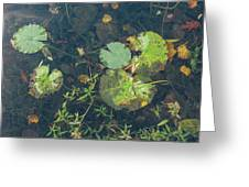 Lilly Pad Close Up  Greeting Card
