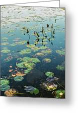 Lilly Pad In Pond  Greeting Card