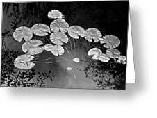 Lilly Pads Fakahtchee Strand Greeting Card