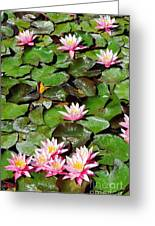 Lilly Pads In Bloom Greeting Card