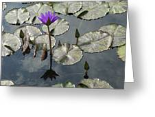 Lilly Pond  Greeting Card