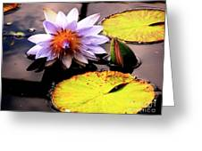 Lillypad In Bloom Greeting Card