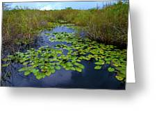 Lillypads In The Everglades Greeting Card