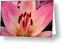 Lily - An Intimate View Greeting Card
