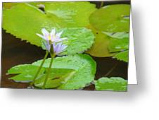 Lily-2 Greeting Card