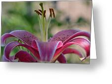 Lily 4 Greeting Card