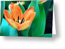 Lily #4 Greeting Card