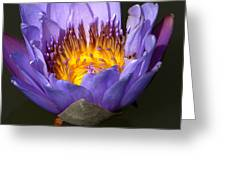 Lily Aglow Greeting Card