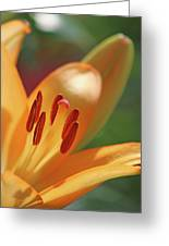 Lily - American Cheerleader 26 Greeting Card