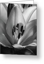 Lily - American Cheerleader 37 - Bw - Water Paper Greeting Card