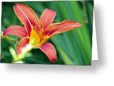 Lily And Glowing Light Greeting Card
