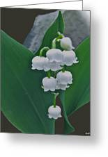 Lily Bells Greeting Card