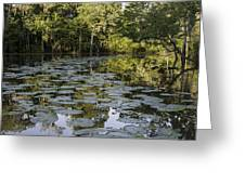 Lily Bend On Blind River Greeting Card