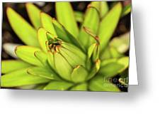 Lily Bud Greeting Card