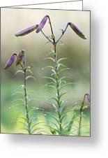 Lily Buds Greeting Card
