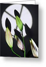 Lily Buds In The Spotlight. Greeting Card