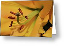 Lily Close Up Greeting Card
