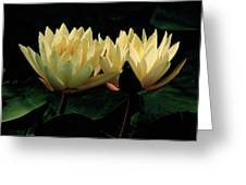 Lily Duet Greeting Card