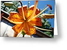 Lily Flower Artwork Orange Lilies 3 Giclee Art Prints Baslee Troutman Greeting Card